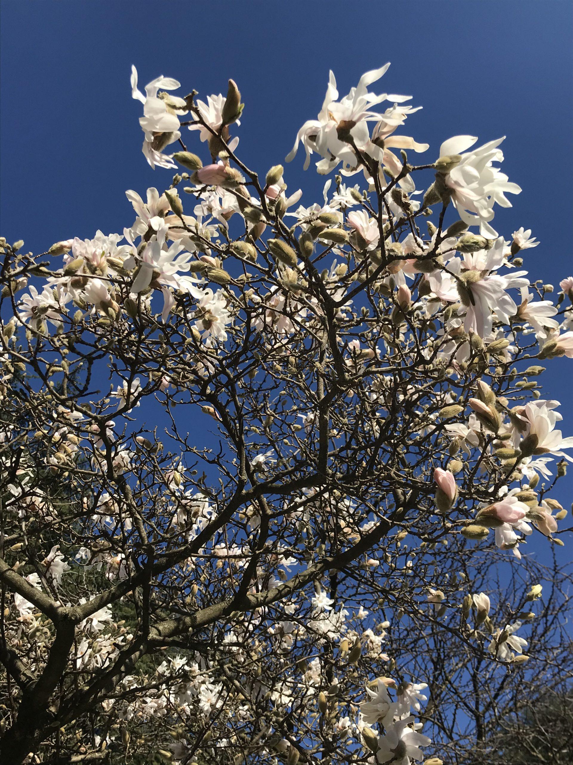 Tredesin de Marz: la festa della Primavera